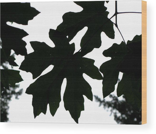 Tree Wood Print featuring the photograph Silhouetted Maple by PJ Cloud