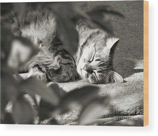 Kitty Wood Print featuring the photograph Sleeping Beauty by Amy Delaine