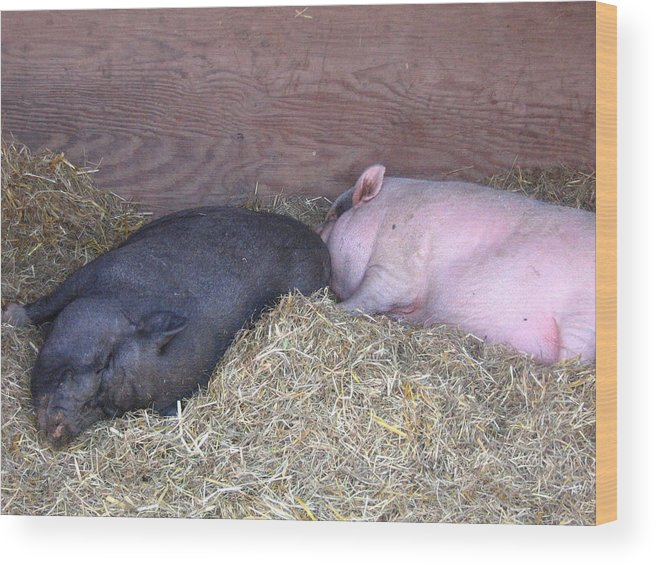 Pig Wood Print featuring the photograph Sleeping Pigs In The Hay by Melissa Parks