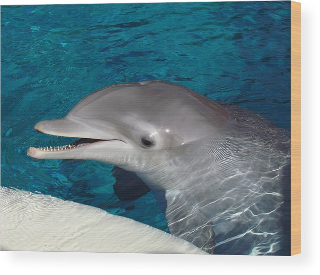 Dolphin Wood Print featuring the photograph Smiling Dolphin by Andrea Arnold