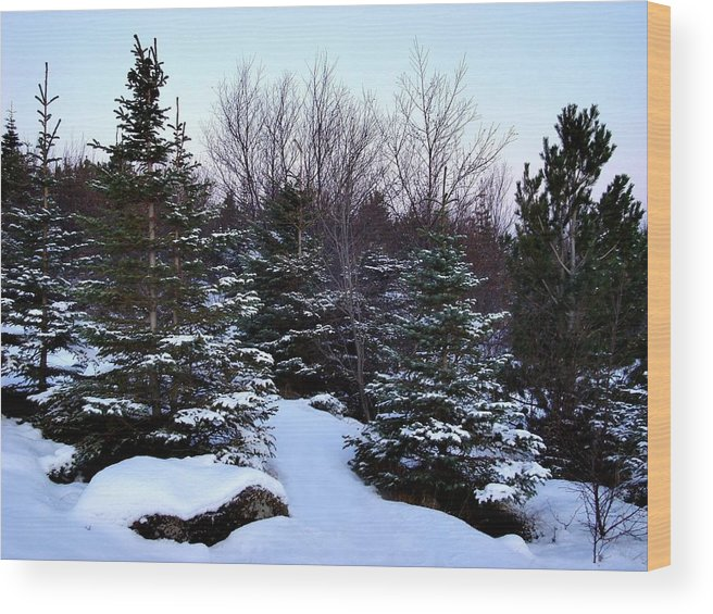 Evergreens And Snow Wood Print featuring the photograph Snow For Christmas by Marilynne Bull