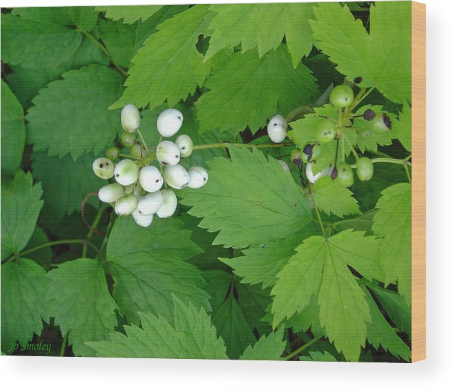 Snow White Bush Of Berries Wood Print featuring the photograph Snow White Berries by Joanne Smoley
