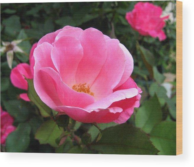 Flower Wood Print featuring the photograph So Pretty by Rhonda Barrett