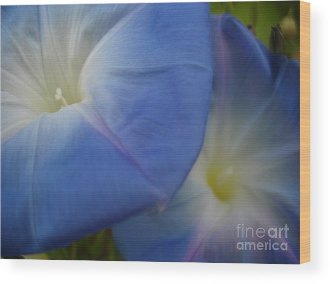Flower Wood Print featuring the photograph Soft Morning Glory by Chad Natti