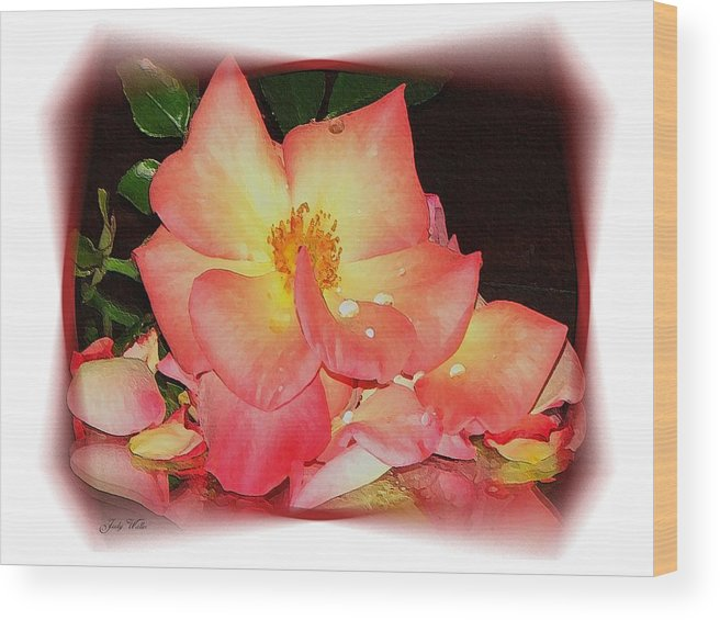 Pink Wood Print featuring the photograph Soft Pink Rose by Judy Waller