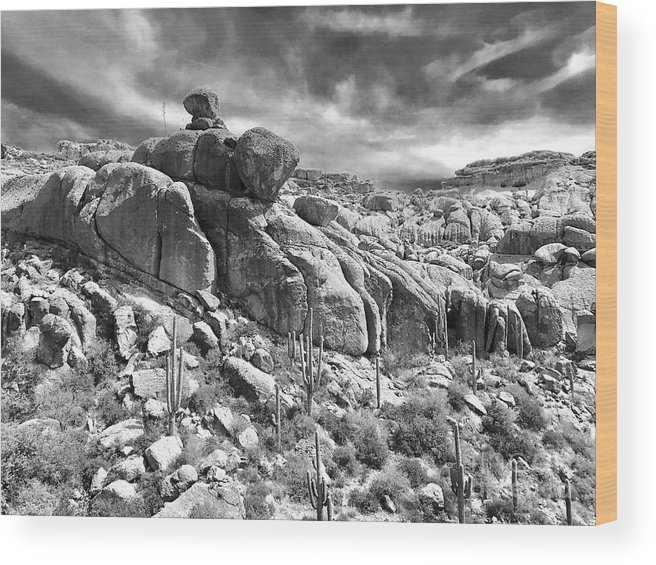 Photography Wood Print featuring the photograph Sonora Desert by Sean Griffin