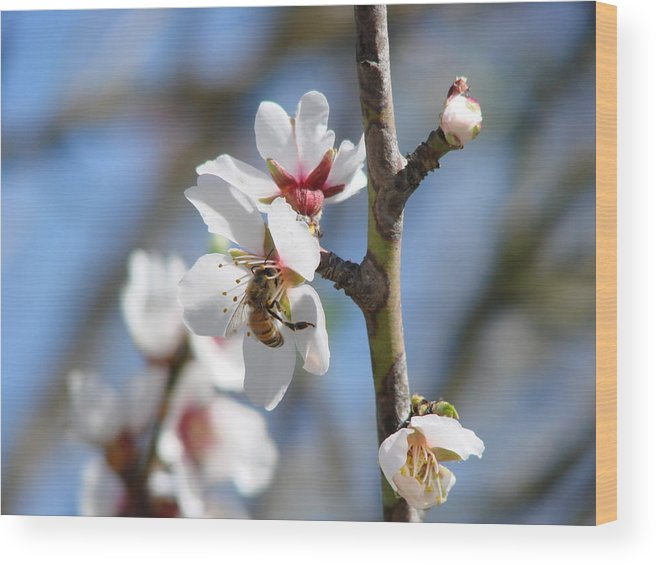 Flowers Wood Print featuring the photograph Spring Bloom by Liz Vernand