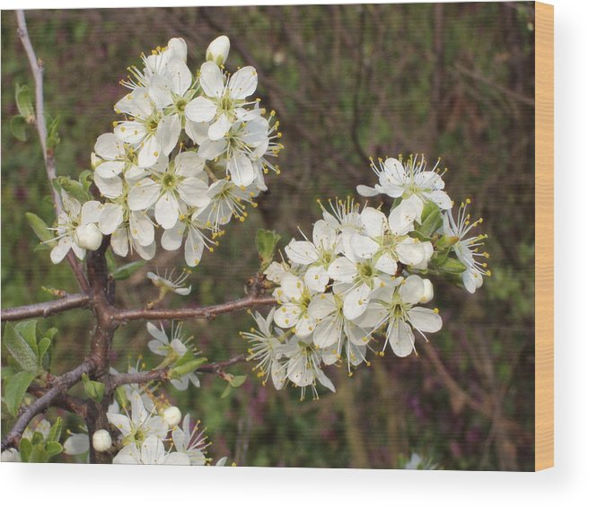 Landscape Wood Print featuring the photograph Spring Blossoms by David Du Hempsey