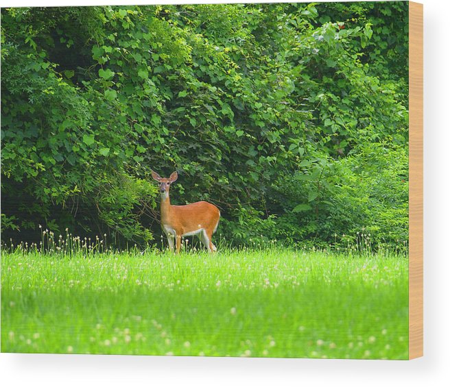 Deer Wood Print featuring the painting Spring Fever by Kim