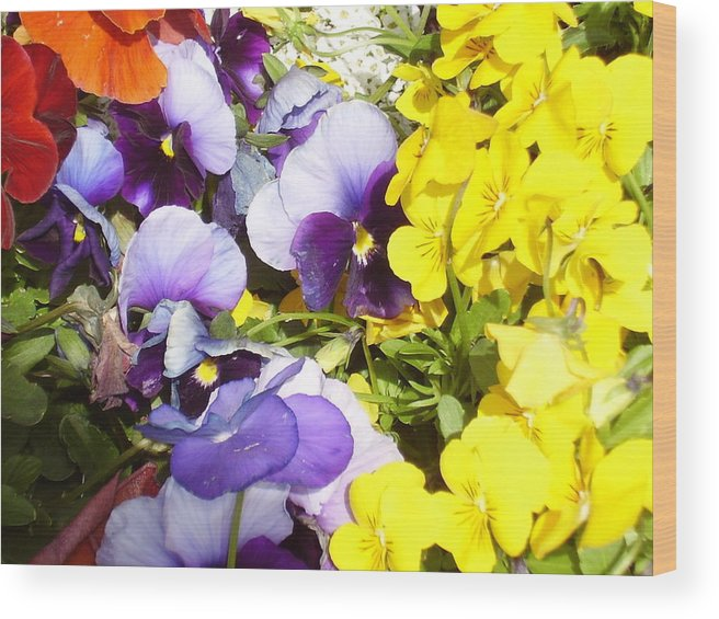 Flowers Wood Print featuring the photograph Spring Flowers by Yvette Pichette