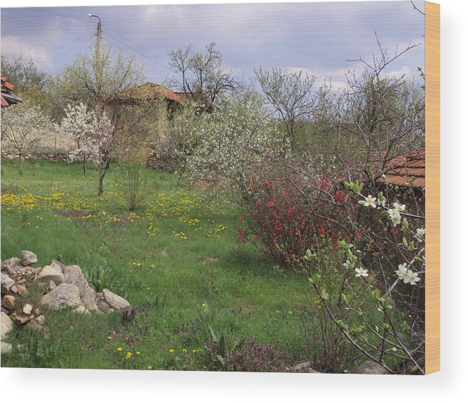 Landscape Wood Print featuring the photograph Spring Yard by David Du Hempsey