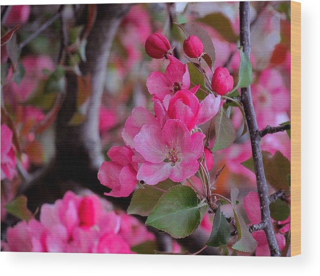 Flower Wood Print featuring the photograph Spring's Gentle Bloom by Andrea Arnold