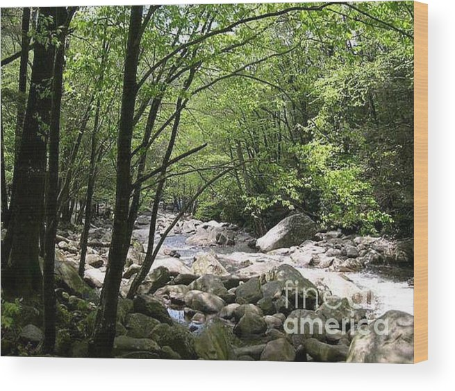 Nature Wood Print featuring the photograph Springtime In The Smoky Mountains by Barb Montanye Meseroll