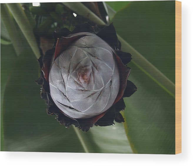 Flora Wood Print featuring the photograph Sprouting by Jacob Stempky