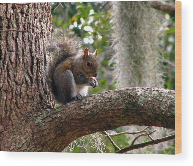 Squirrel Wood Print featuring the photograph Squirrel 7 by J M Farris Photography