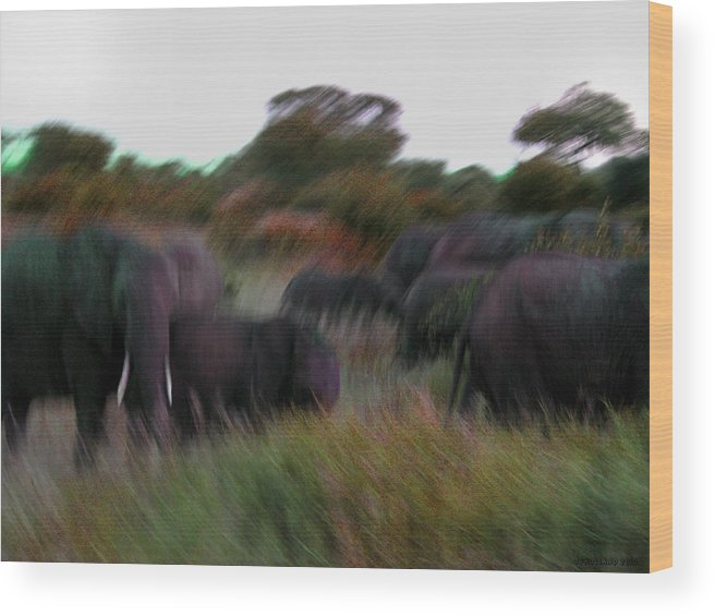 African Elephant Wood Print featuring the photograph Stampede by Joseph G Holland