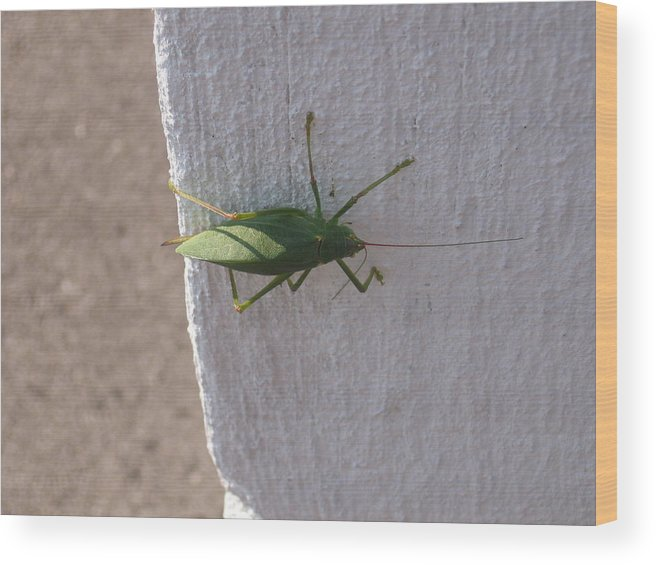 Green. Geen Bug Wood Print featuring the photograph Stopping By by Sandra Winiasz