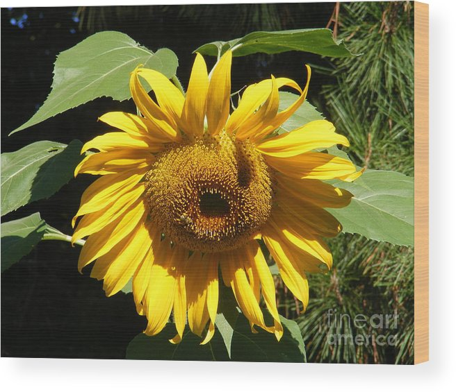 Landscape Wood Print featuring the photograph Strolling Through The Sunflowers by Gail Salitui