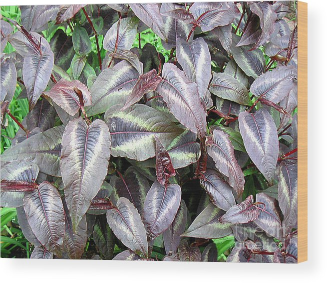 Nature Wood Print featuring the photograph Subdued Leaves by Lucyna A M Green