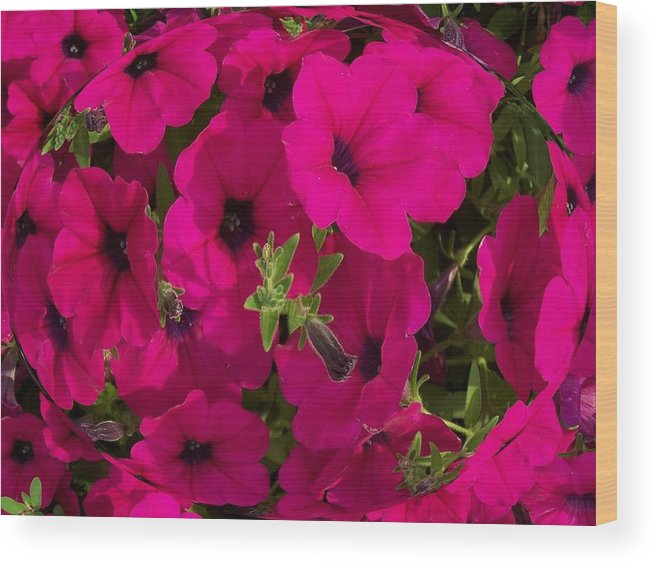 Summer Wood Print featuring the photograph Summer Glamor by Vijay Sharon Govender