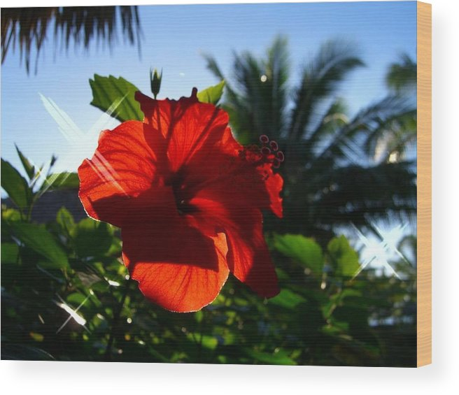 Flowers Flowers Flowers Wood Print featuring the photograph Sun And Flowers by Jonathan Galente