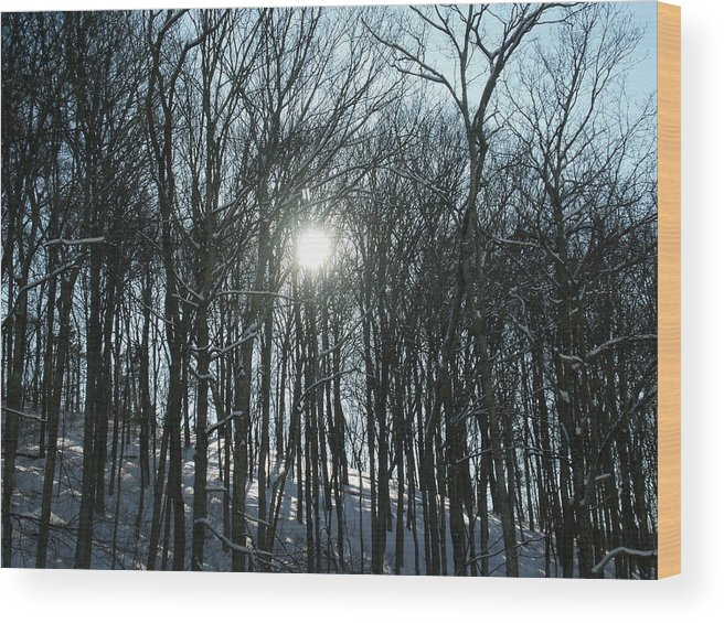 Sun Wood Print featuring the photograph Sun Through The Trees by Martie DAndrea