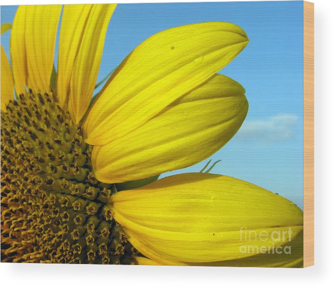Sunflowers Wood Print featuring the photograph Sunflower by Amanda Barcon