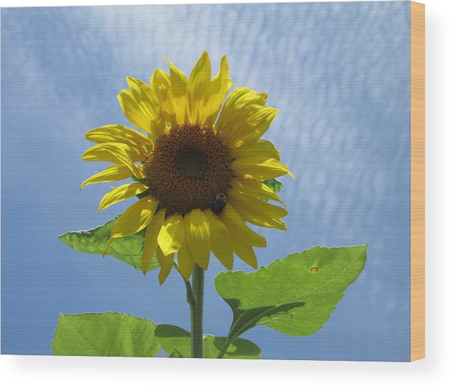 Sunflower Wood Print featuring the photograph Sunflower And Bee by Mary Ivy