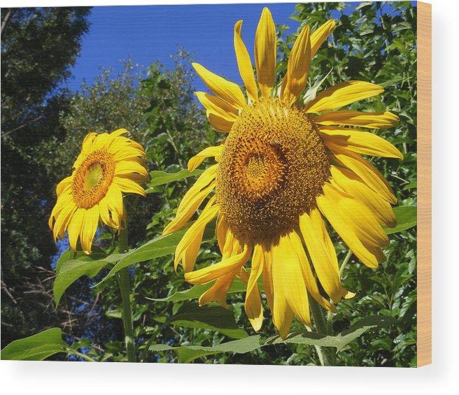Sunflowers Wood Print featuring the photograph Sunflower Garden by Gail Salitui