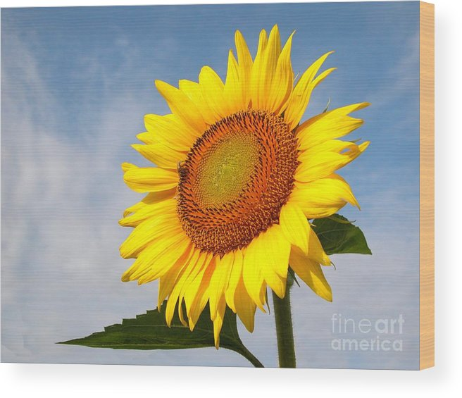 Sunflower Wood Print featuring the photograph Sunny Day by Michelle Hastings