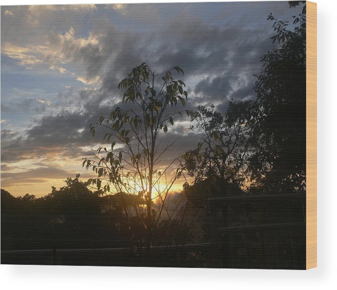 Sunset Wood Print featuring the photograph Sunset Leaves 5 by Padamvir Singh