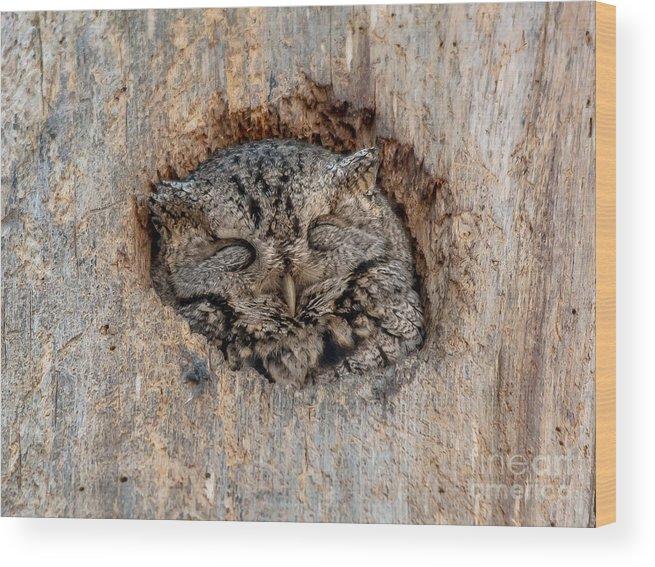 Cheryl Baxter Photography Wood Print featuring the photograph Sweet Dreams Screech by Cheryl Baxter
