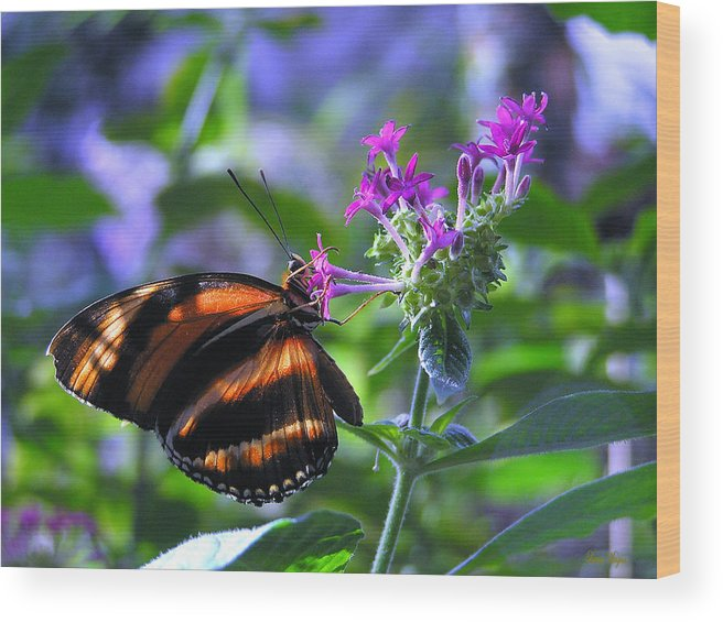Butterfly Wood Print featuring the photograph Sweet Nector by Louise Magno