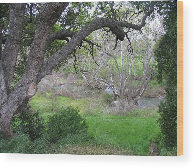 Landscape Wood Print featuring the photograph Sycamore Grove by Karen W Meyer