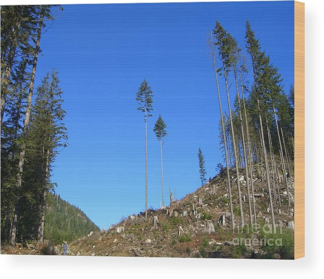 British Columbia Wood Print featuring the photograph Tall Timbers by Jim Thomson