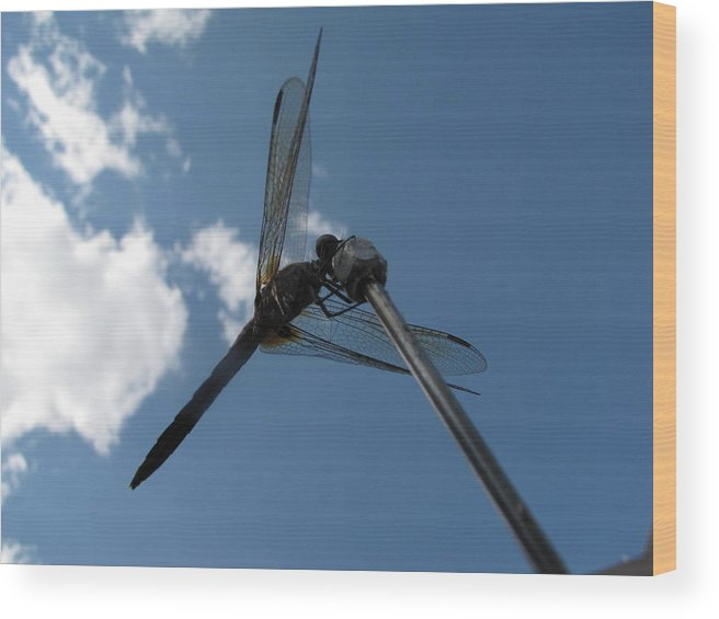 Nature Wood Print featuring the photograph The Buzz by Joseph Cusano IV