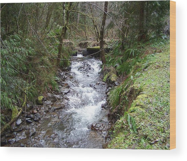 Digital Photography Wood Print featuring the photograph The Creek by Laurie Kidd