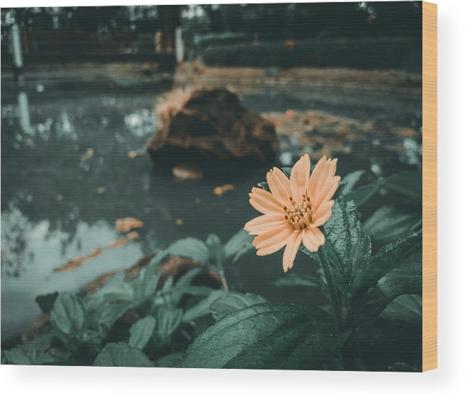 Flower Wood Print featuring the photograph The Flower by Jogim Decilos