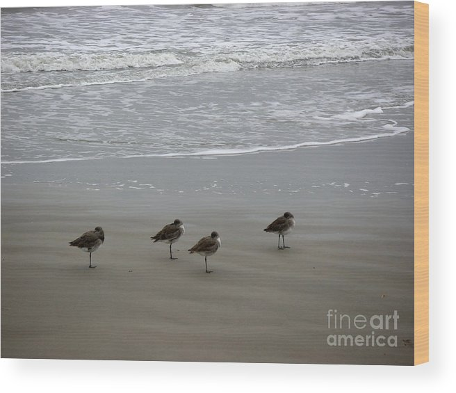 Nature Wood Print featuring the photograph The Gulf In Shades Of Gray - Do Re Mi And Fa by Lucyna A M Green