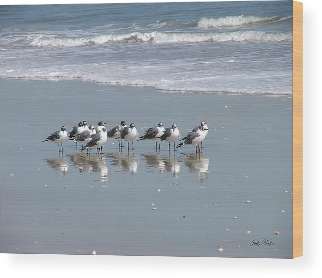 Beach Wood Print featuring the photograph The Gull Gang by Judy Waller