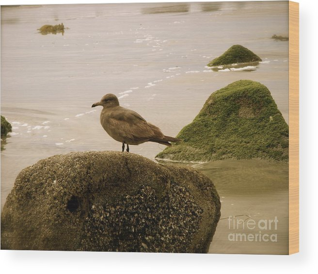 Ocean Wood Print featuring the photograph The Lookout by Amy Strong