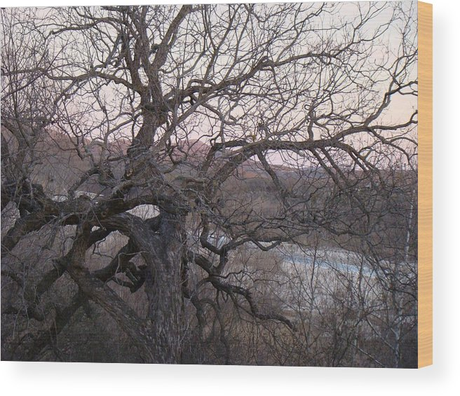 Pecan Tree Wood Print featuring the photograph The Mother Tree One by Ana Villaronga