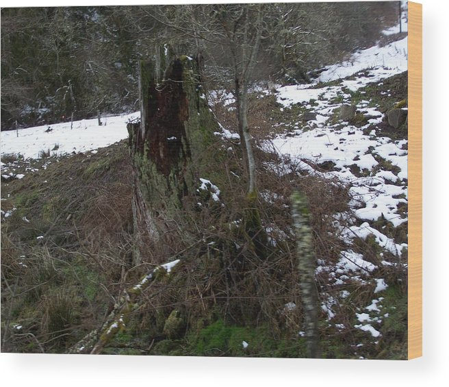 Digital Photography Wood Print featuring the photograph The Old Stump by Laurie Kidd