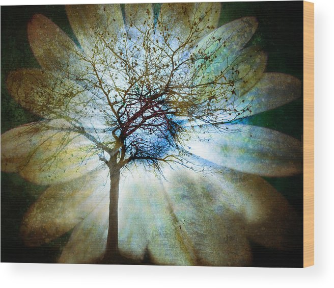 Trees Wood Print featuring the photograph The Truth Of Trees by Tara Turner