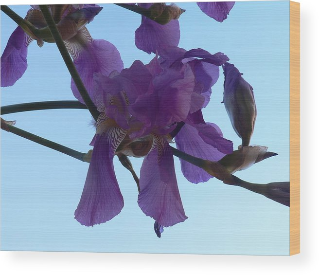 Iris Wood Print featuring the photograph Through Vincent's Eyes by Cynthia Ann Swan