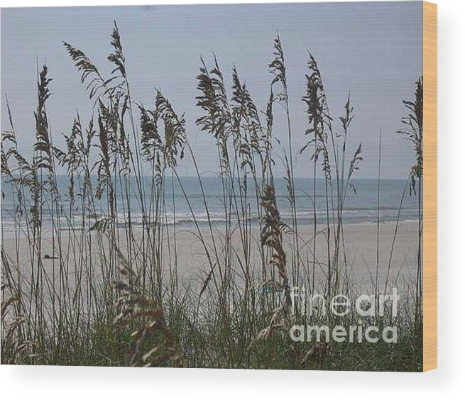 Florida Beach Near St. Augustine Wood Print featuring the photograph Thru The Sea Oats by Barb Montanye Meseroll