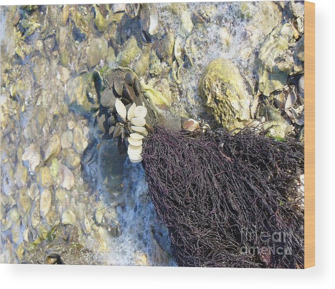 Ocean Wood Print featuring the photograph Tide Pool by Stephanie Richards