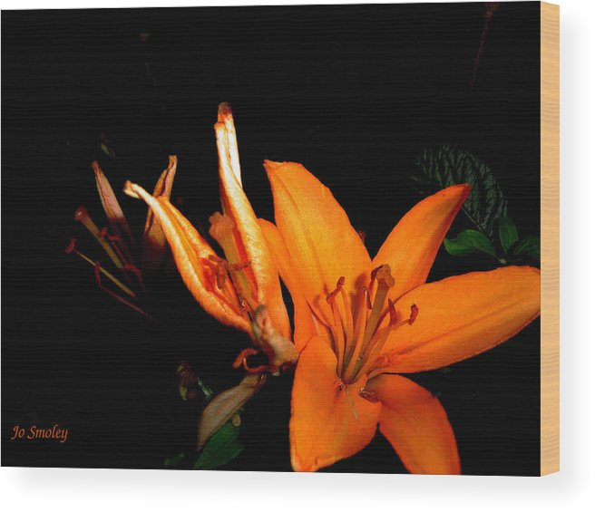 Tiger Lily Wood Print featuring the photograph Tiger Lily by Joanne Smoley