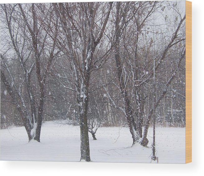 Snow Wood Print featuring the photograph Today - November 25 - Photograph by Jackie Mueller-Jones