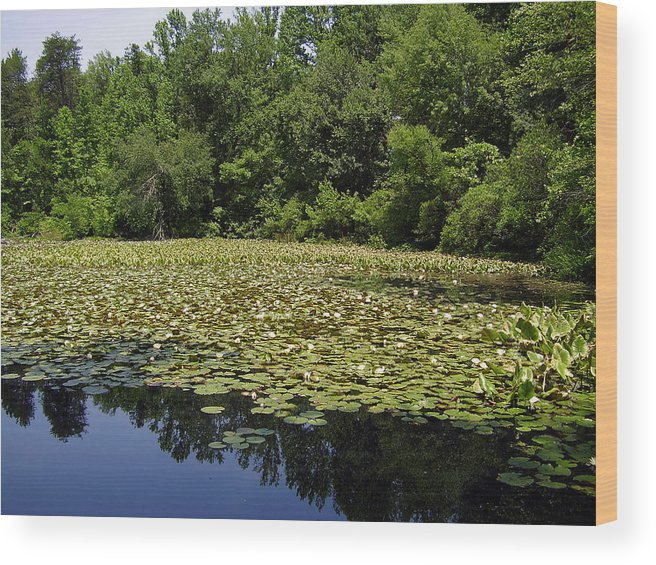 Tranquility Wood Print featuring the photograph Tranquility by Flavia Westerwelle
